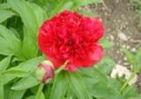 お花が咲いて