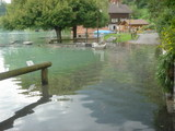 洪水Oberried4