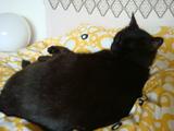 トノ寝てる。。。
