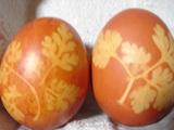 茶色の卵�