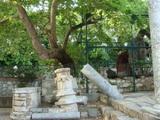 プラタナスの木