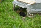 ウサギも一杯