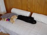 トノチャンがソファーの上で寝てます