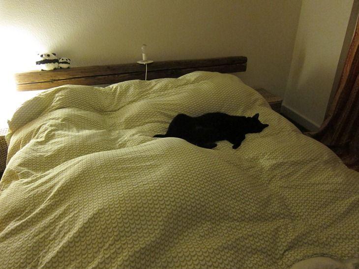 トノインベッド
