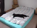 今日もまたトノは寝る