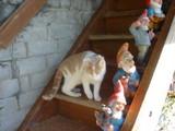 ミミちゃん階段で