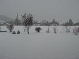 雪降ってます2