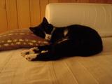 ソファーで寝るさまちゃん