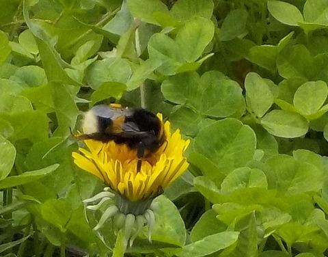 ハチのこと