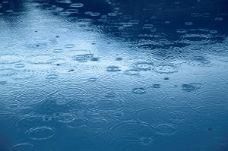 昨日は予報が外れて、また雨 ...