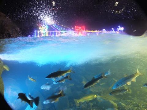 山梨 博志「山の水族館のクリスマス」