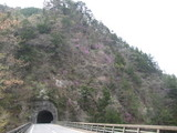 大輪トンネルと岩つつじ