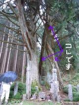 2011_09_26 012-1