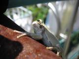 白カエル君の横顔