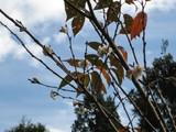 登り口の十月桜