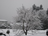 今日も雪、雪。