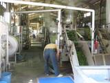 尾の島のお茶工場