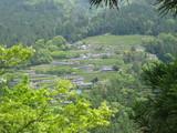 中井侍のお茶畑