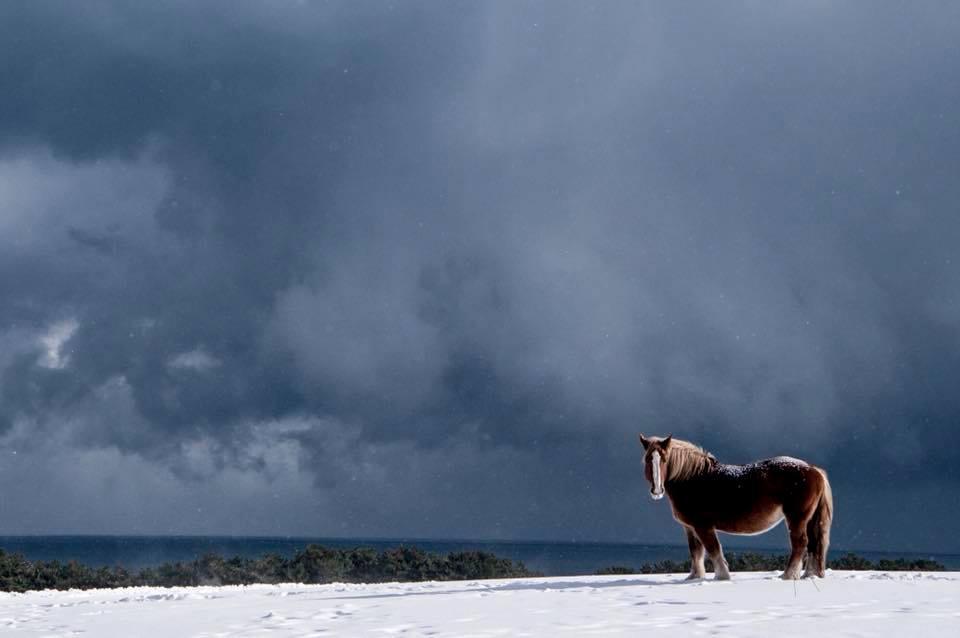 下北半島 寒立馬《美しい日本の風景》