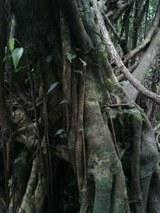 山旅実況生ブログ「がじゅまるの森」