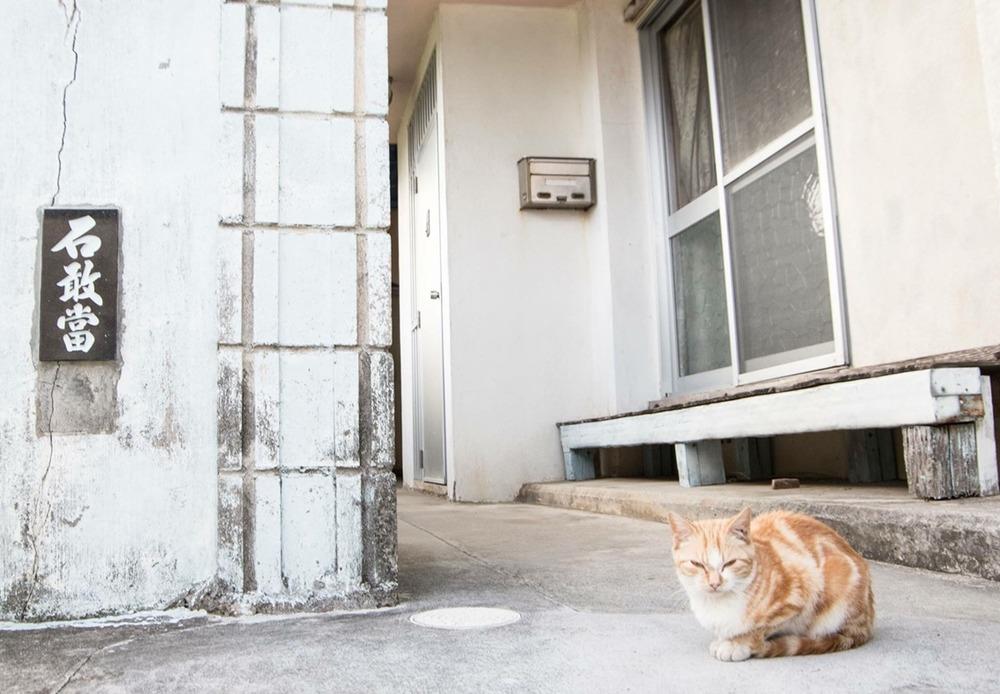 慶良間ネコ