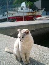 港と猫も良く似合う