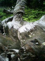 山旅実況生ブログ「屋久島に来ました」
