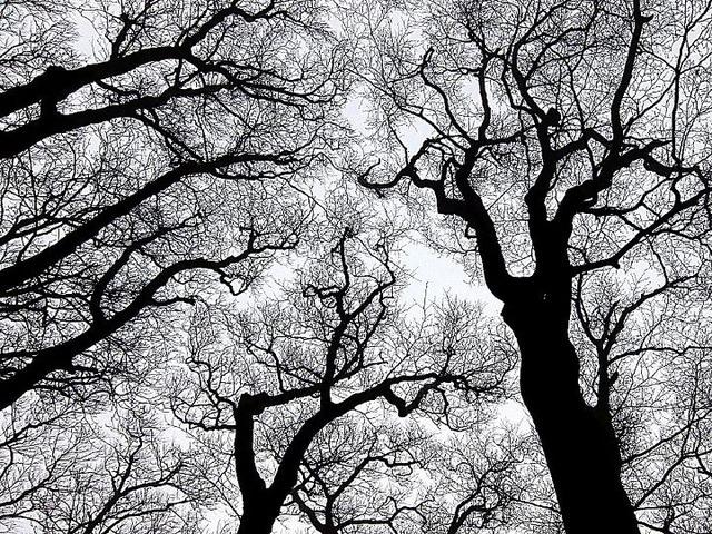 晩秋の天城の森にて