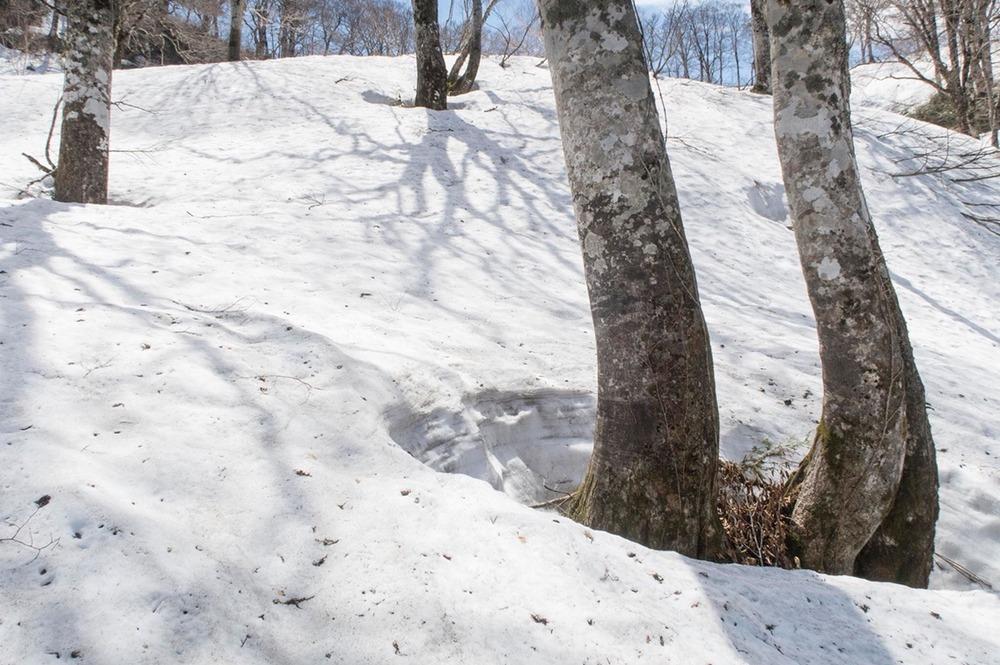 残雪のブナの森