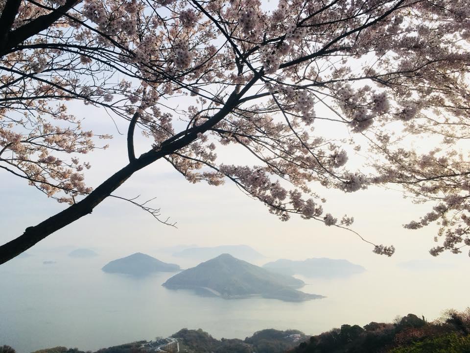 瀬戸内の島々と桜