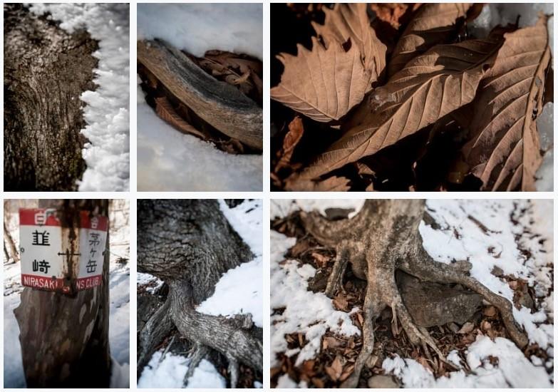 冬の森の記録