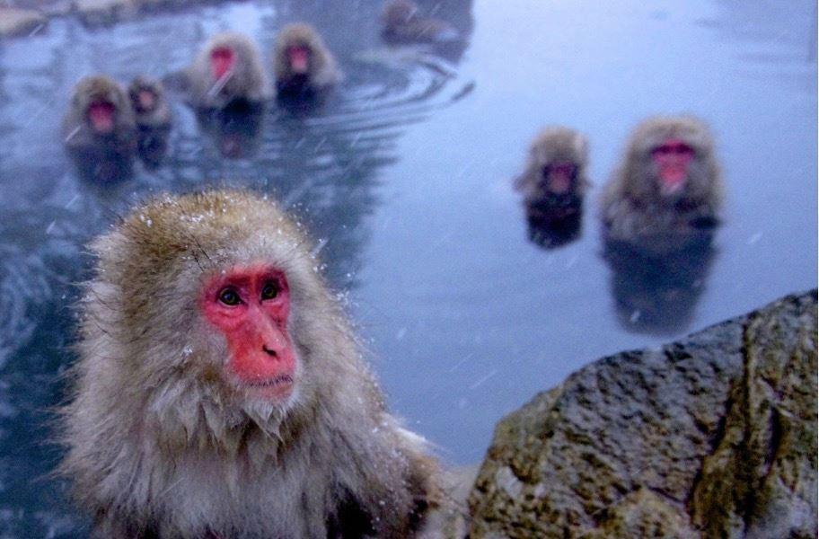 地獄谷野猿公苑《美しい日本の風景》