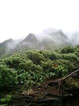 山旅報告「WILD1 八ヶ岳 赤岳」