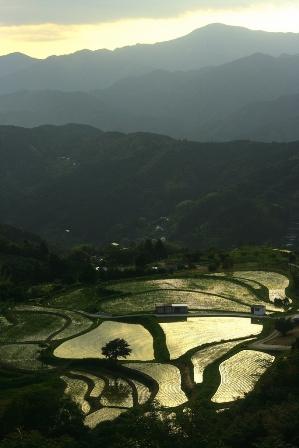 撮影旅報告「緑輝く四国、天上の棚田を撮る」