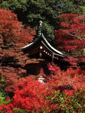 京都一日目 阿弥陀堂