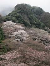 ガイド報告「山桜の黒髪山、樹氷の雲仙岳、雪の多良岳&稲佐山登頂」