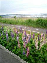 チャリ旅実況生ブログ「サイクリングロード」