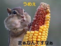 リス - コピー