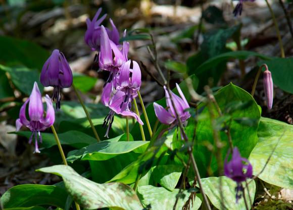 春の花-2