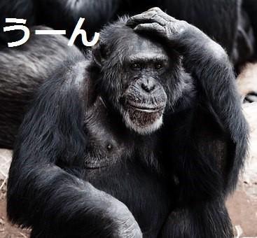 animal-17474__340 - コピー