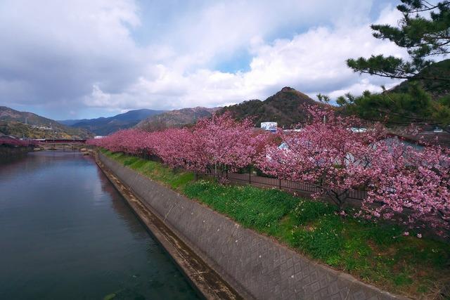 200209_河津桜ツーリング05s