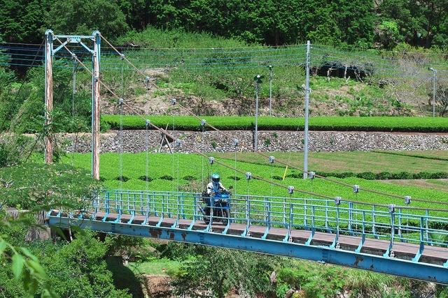 210811_吊橋DAEG011s