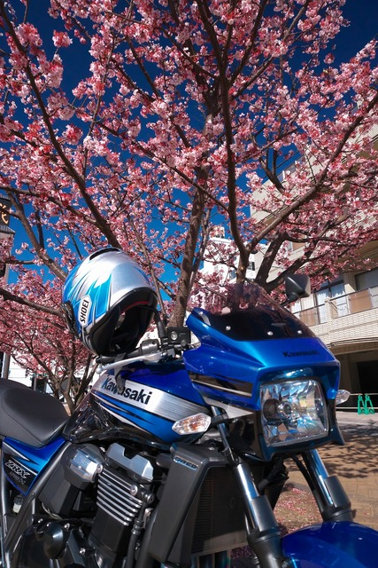 200209_河津桜ツーリング03s