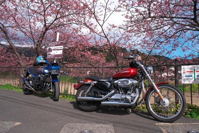200209_河津桜ツーリング12s