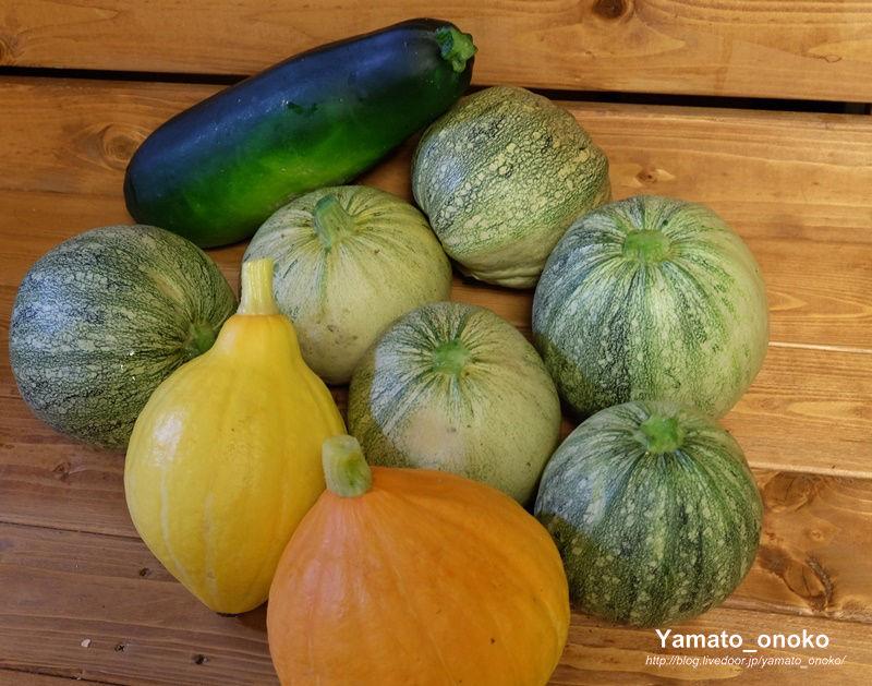 160618-harvest
