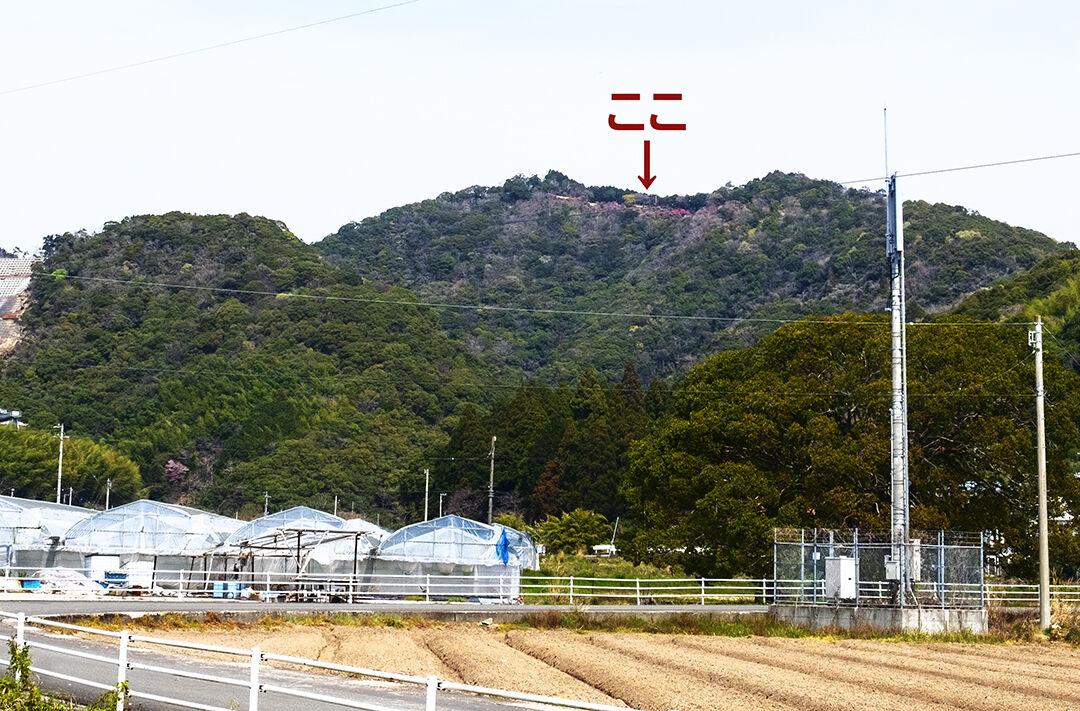 22-tsutsuji1