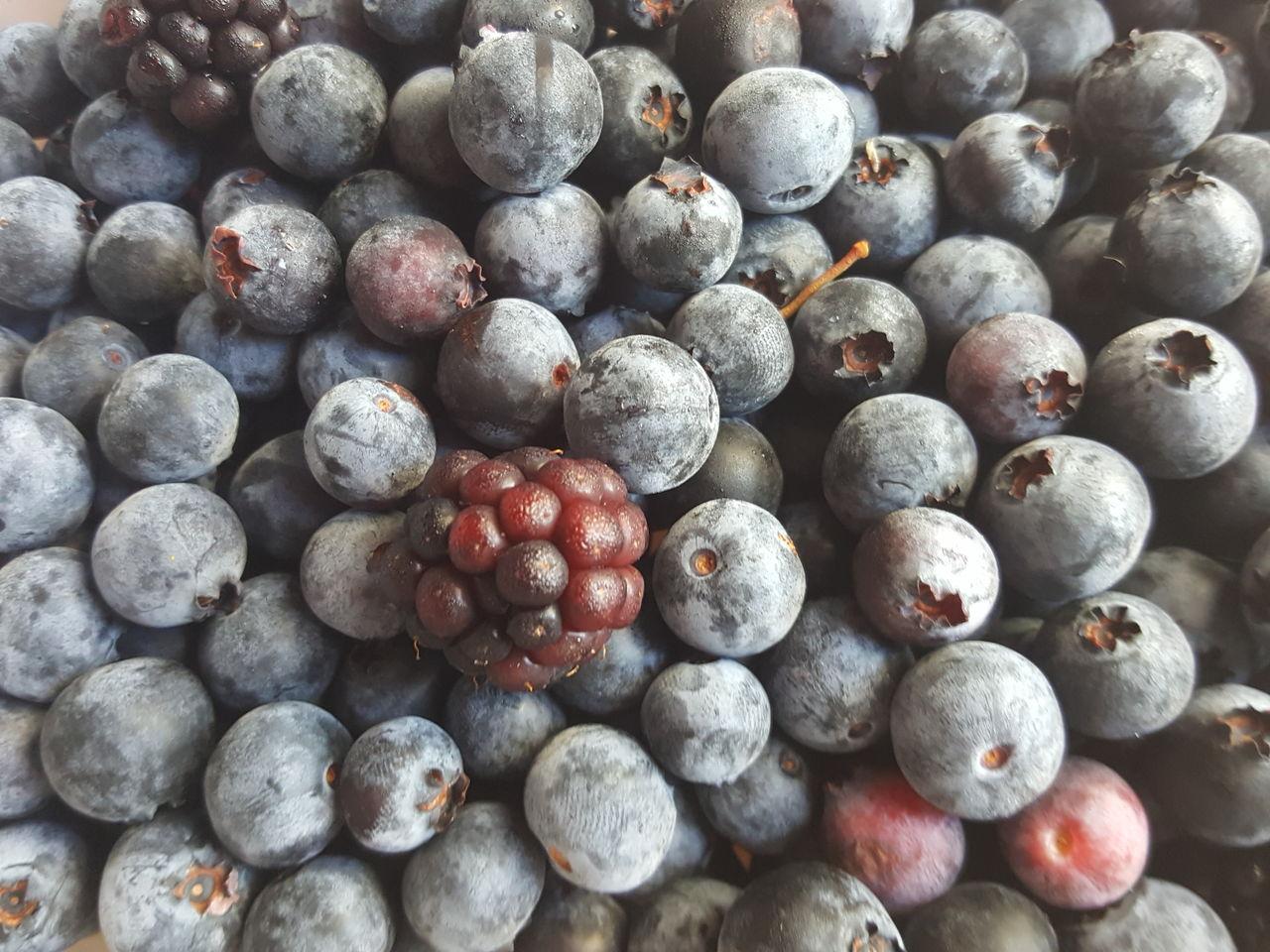0702-blueberry