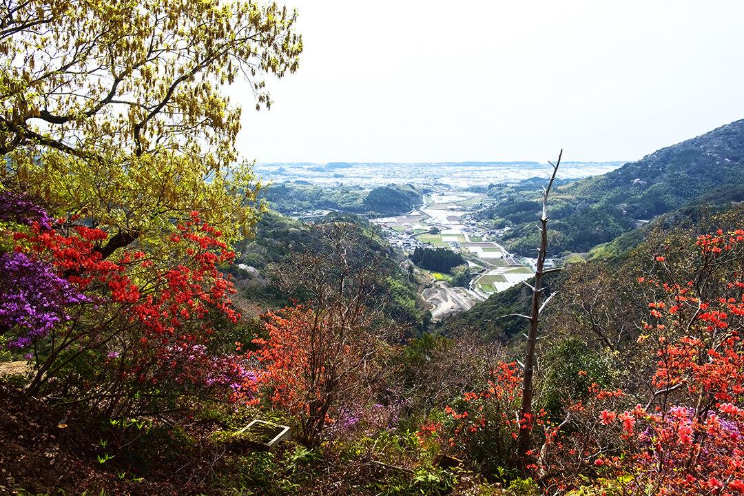 22-tsutsuji4