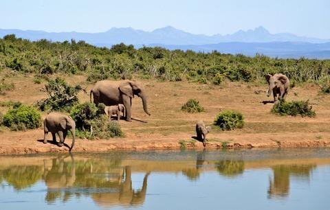 africa-animals-elephants-52717