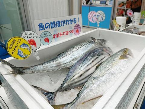 魚色補正済